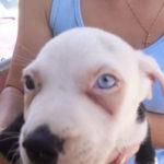 American dog terrier network nose ears eyes coat ft