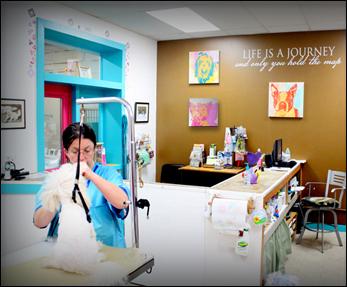 Diamondz pet health spa be between