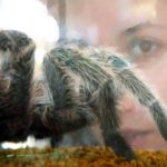 Exotic creatures / wildlife as pets