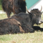 Faq about yak &lsaquo the meadows at lake norman