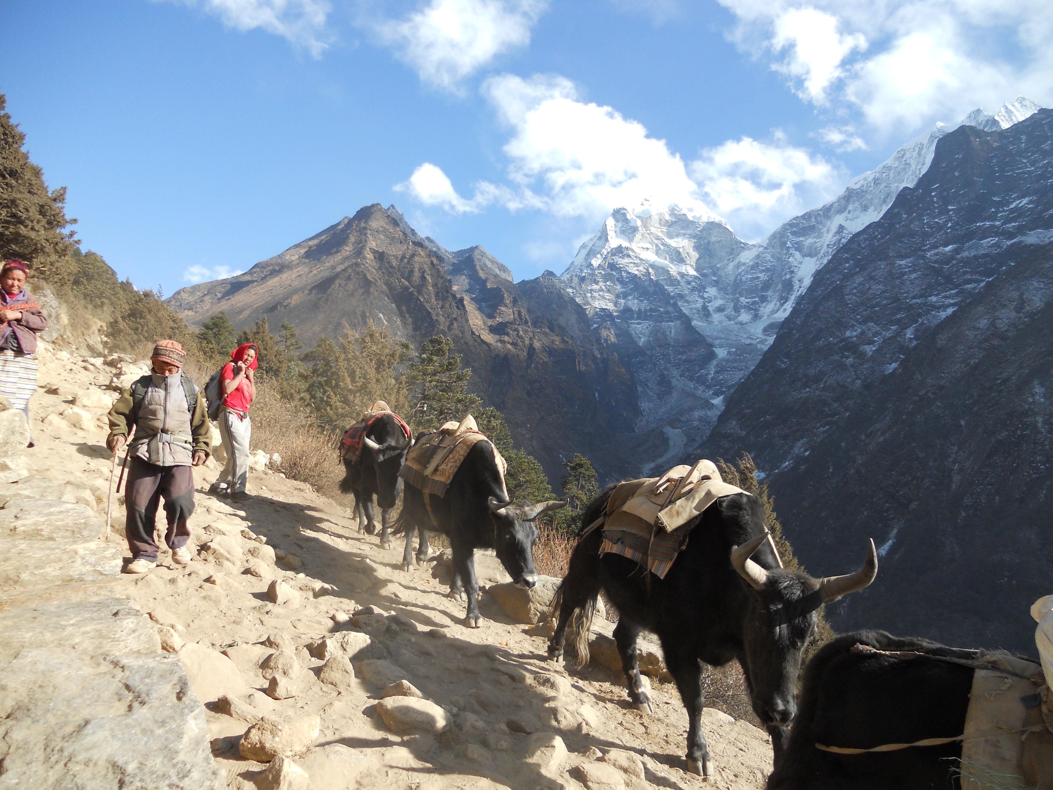File:yak nepal.digital - wikimedia commons example Exif metadata