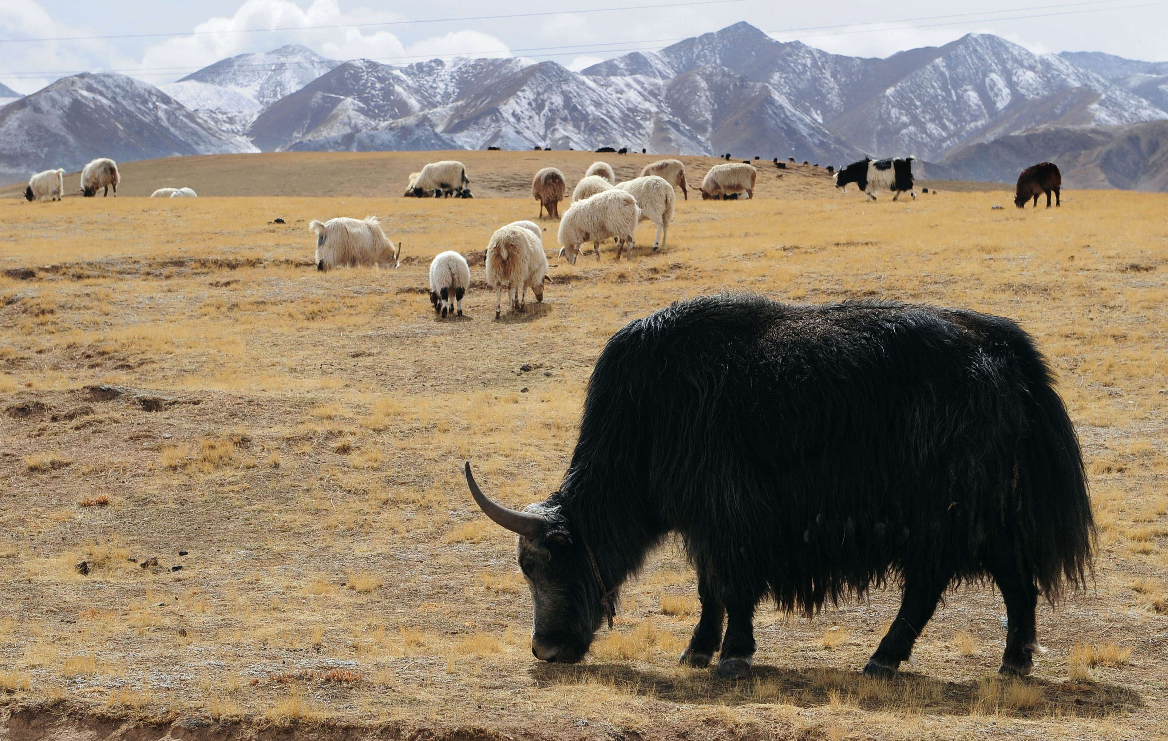 Global warming news: expect nature yak Now, your pet hangs on