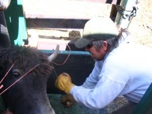 horn tip removal
