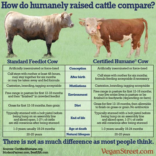 How you can differentiate between bulls, cows, steers and heifers to live and also be