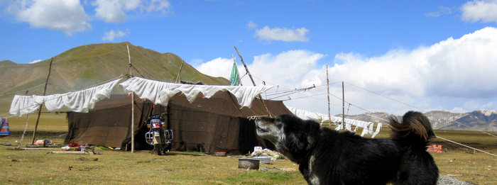 Nomad adventure - camping with tibetan nomads snowlion tours forest valley, you
