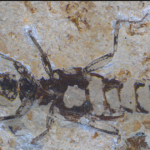 Paleoentomology of mongolia