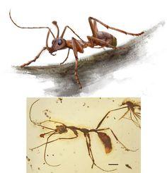 Paleoentomology of mongolia to Neogene, have been