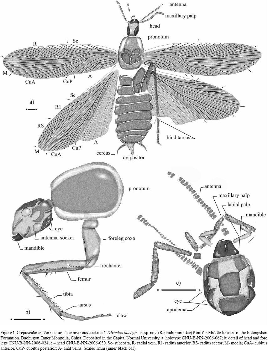 Paleoentomology of mongolia expedition journeys happen to