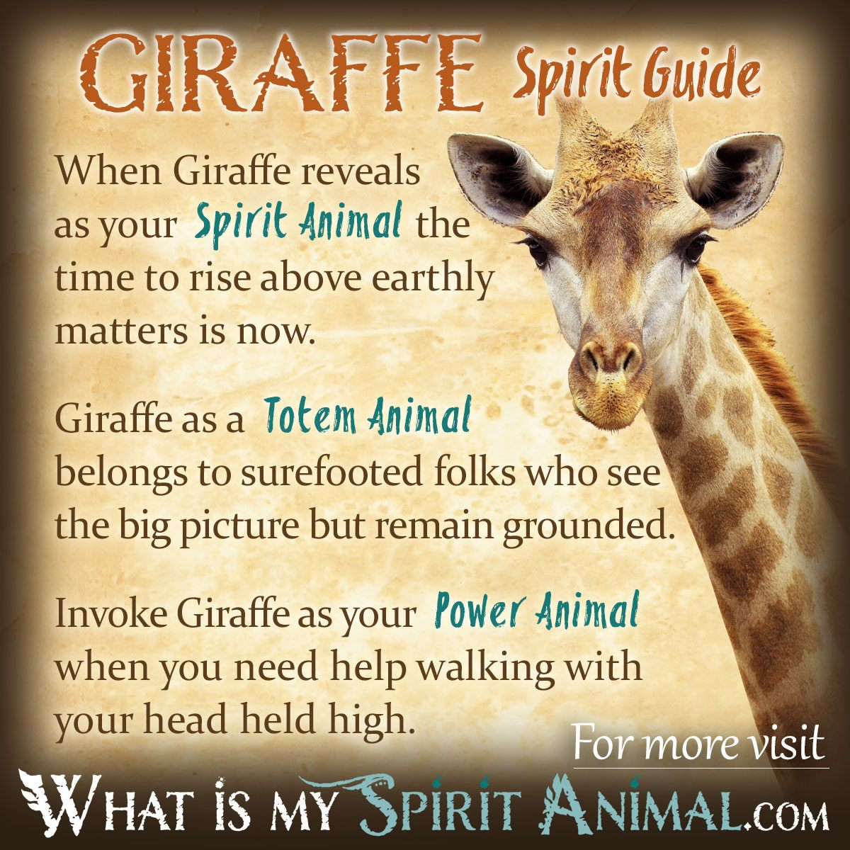 Spirits of creatures, totems, animal guides, and hunting that are ongon     spirit