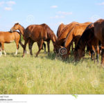 Summer time pasture