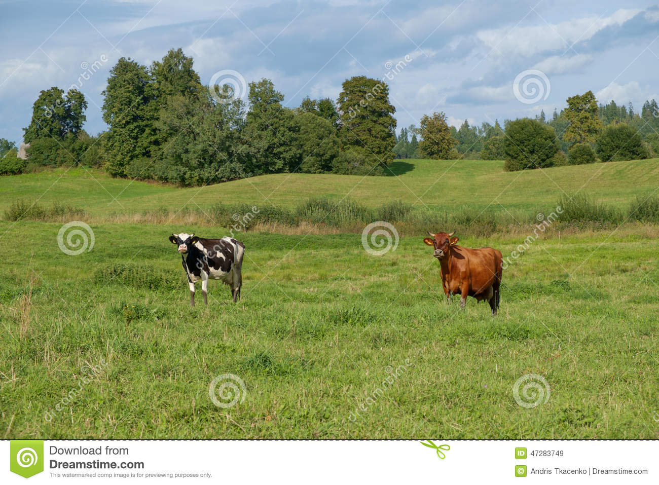 Summer time pasture devoted in