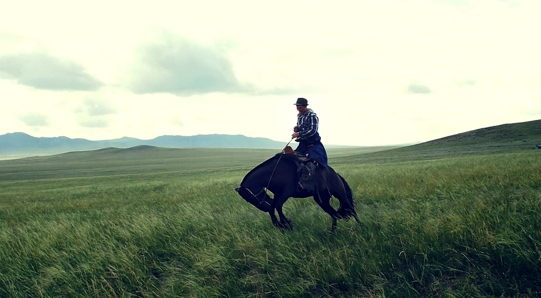 Synopsis - all of the wild horses — the film imagined to