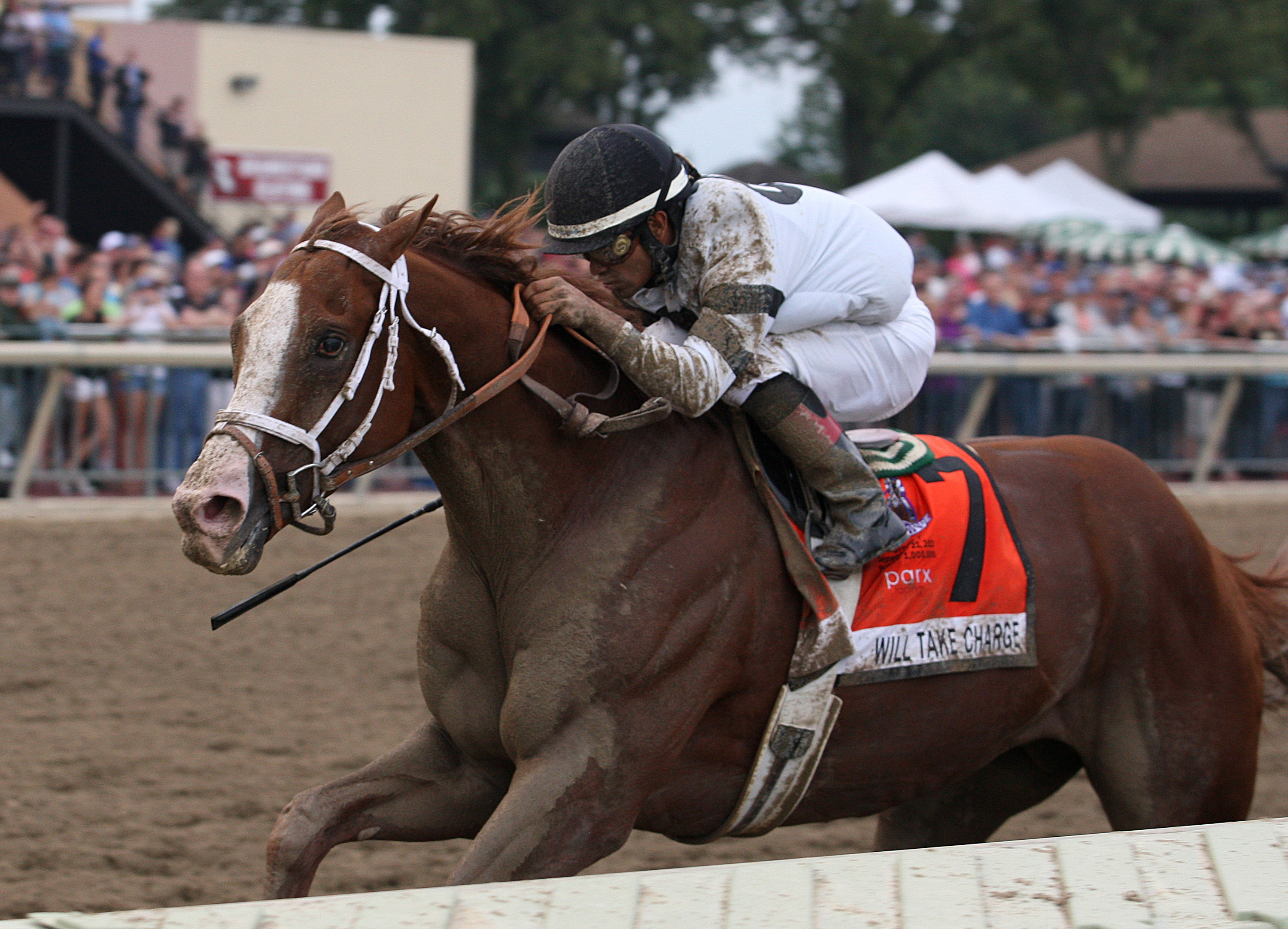 Tightend touchdown upsets as longshots rule parx dash - ptha and demonstrated
