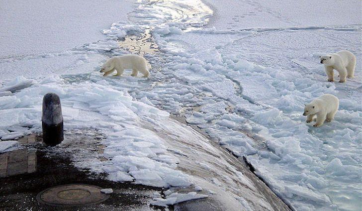 #1 Polar Bear -