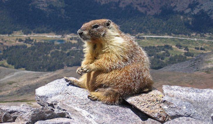 #12 Marmot -
