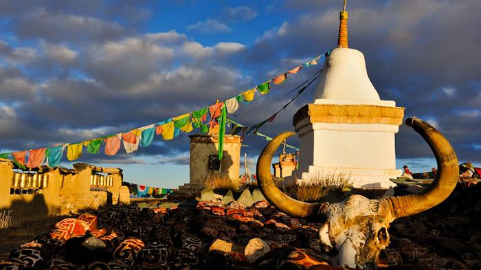 Tibetan yak horn
