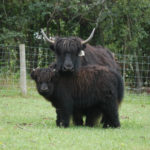 Worldwide yak association – home